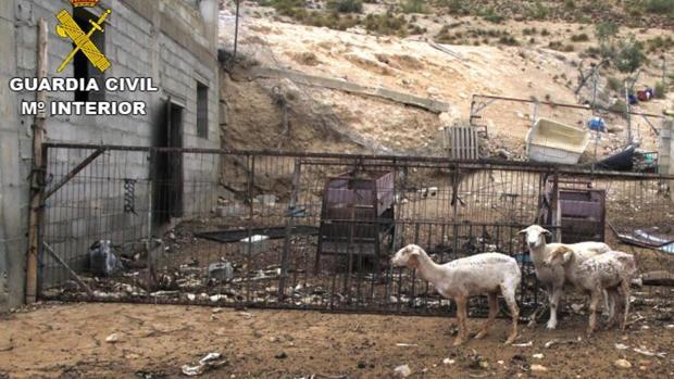 Investigan a un ganadero de Granada por dejar morir de hambre a 200 ovejas y dos perros
