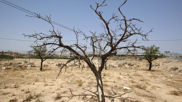 Imagen de los efectos de la sequía en la provincia de Alicante