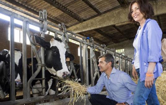 Toni Cantó alimentando vacas, banderas del revés en el bus de C's y otras anécdotas de la campaña en Galicia