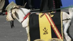 «Pepe»,«Pablo» y «Miura», las mediáticas mascotas de la Legión
