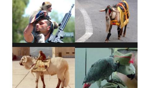Imágenes de mascotas que la Legión ha tenido en toda su historia