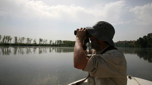 Los más aventureros pueden recorrer en barco el Duero para avistar aves en Valladolid