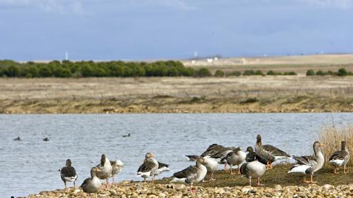 Los Humedales son un lugar único para observar diferentes tipos de aves