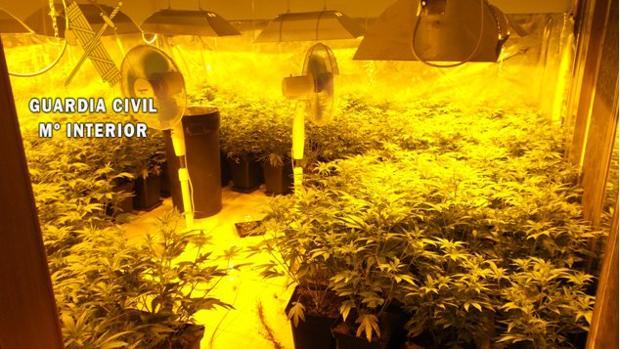 Plantación de marihuana desmantelada en Yeles