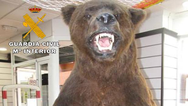 El ejemplar de oso pardo estaba expuesto en el escaparate de la tienda