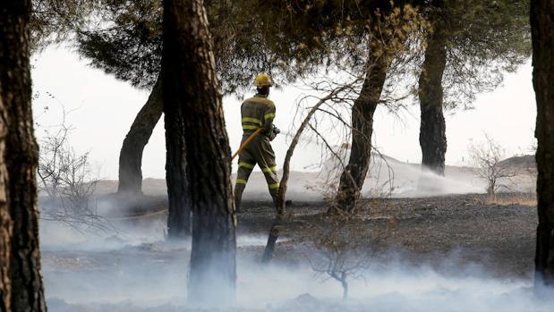 Incendio en el término municipal de Laguna de Duero (Valladolid)
