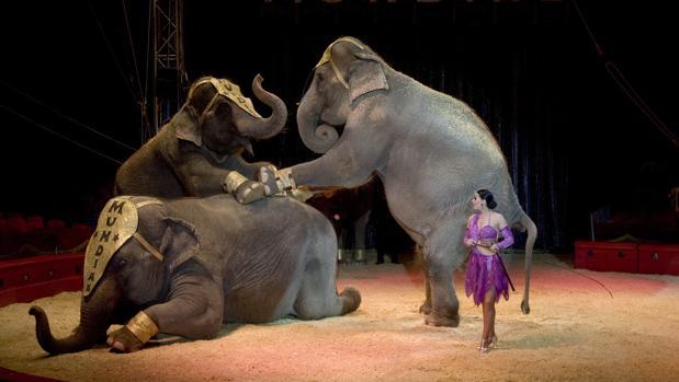 Imagen de archivo de elefantes en un circo