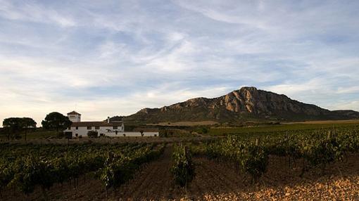 Vista de viñedo y edificio de Bodegas Almanseñas