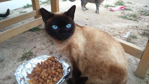 Uno de los gatos de la colonia de Russafa