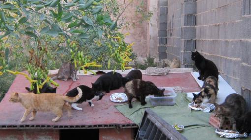Parte de la colonia de gatos que tiene que ser desalojada en Russafa