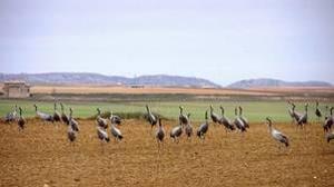La Junta decide dar la máxima protección ambiental a 21.000 hectáreas cerca del ATC