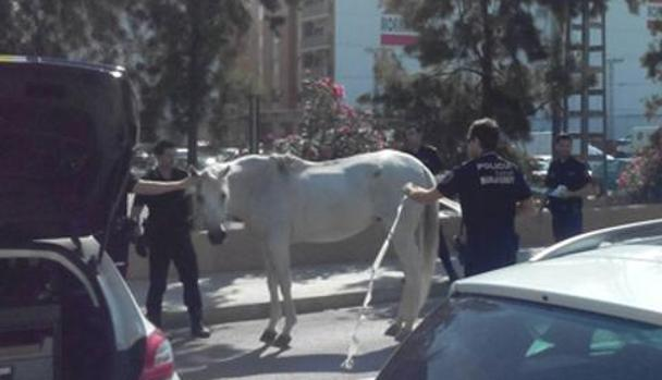 Imagen del caballo