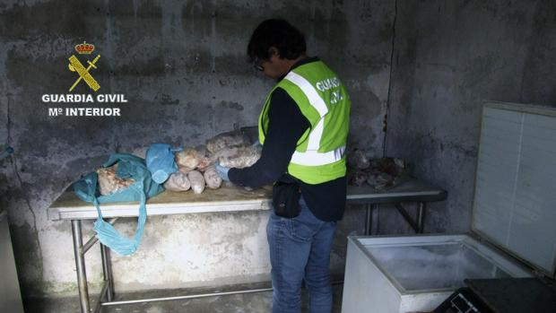 Agentes de la Guardia Civil registran el almacén donde se encontraba la carne