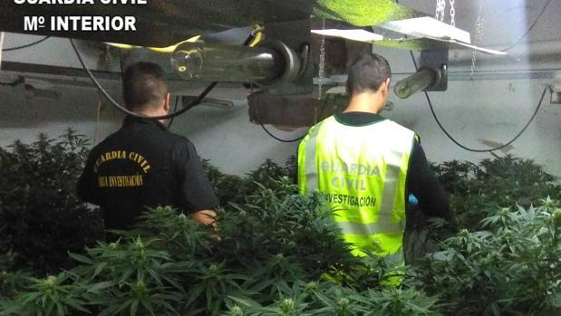 Intentan robar 21 macetas de marihuana trepando por una fachada