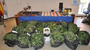 Cae un grupo de narcotraficantes dedicado al cultivo y distribución de marihuana