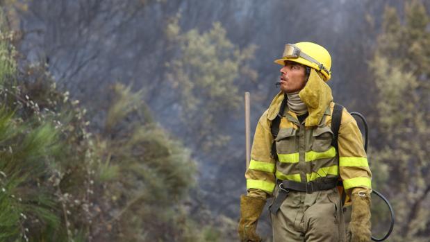 La superficie forestal quemada ha descendido un 38 por ciento