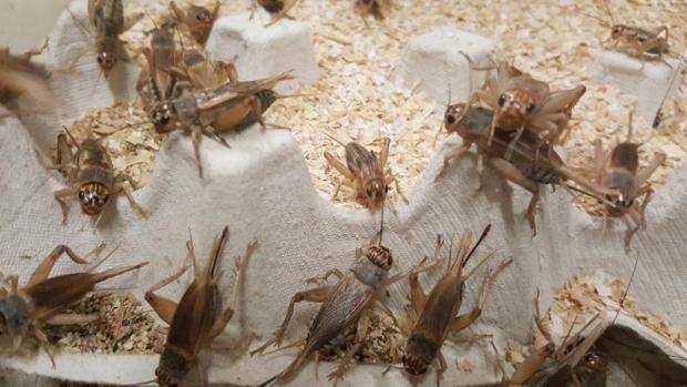 Insectos de la granja valenciana Krik, en una imagen cedida a Efe