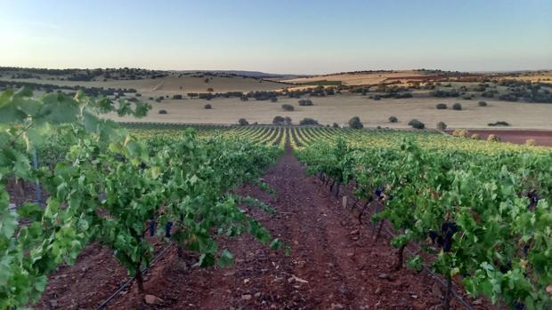 Orissón y Oretano renacen como mejores nuevos vinos de 2016