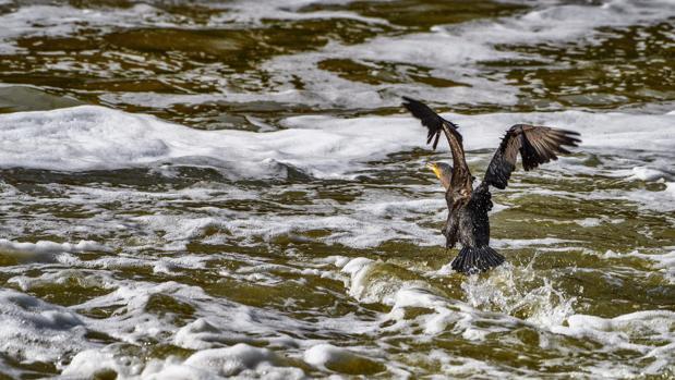 Los toledanos se despertaron el sábado con el Tajo lleno de espuma, en una imagen más lamentable de la que ya de por sí tiene el río