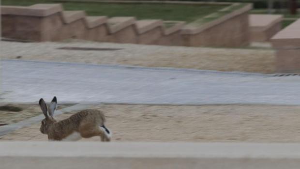 Un conejo corre por un parque público