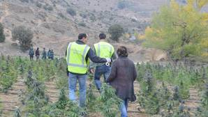 Hallan en un pueblo de Teruel marihuana suficiente para llenar dos campos de fútbol
