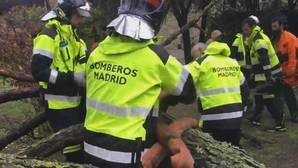 En vídeo: Así retiran los bomberos un árbol de grandes dimensiones