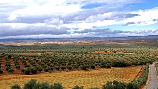 Paisaje del Campo de Montiel, donde se pretende explotar las tierras raras