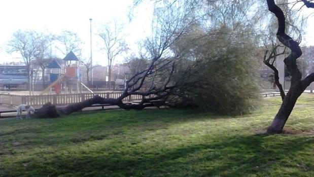 Un árbol caído en un parque de Barcelona