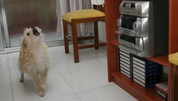 Un jurado declara culpable a un hombre acusado de matar a su vecino por los ladridos de sus perros