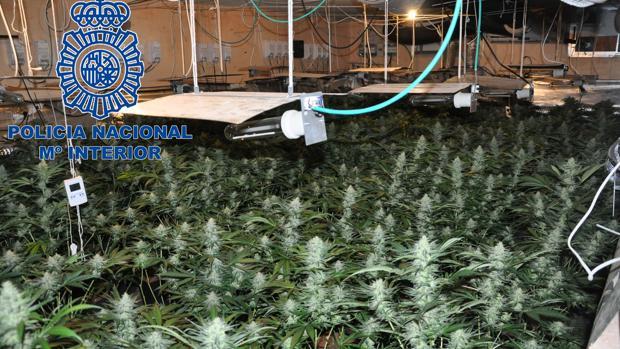 Plantaciones interiores de cannabis