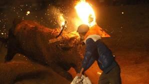 Antitaurinos intentarán boicotear el Toro Jubilo de Medinaceli