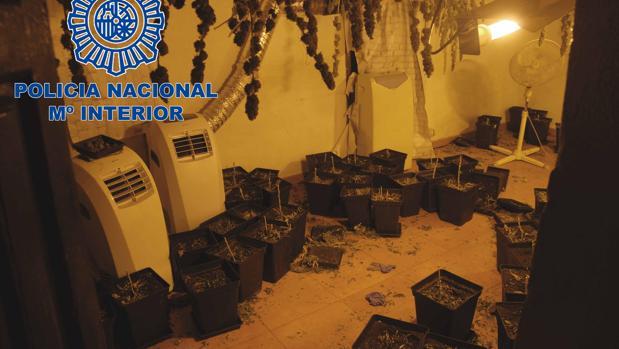Plantación de marihuana encontrada en el interior de la casa habitada por okupas