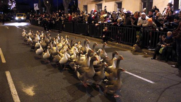 Esta imagen, con las ocas desfilando por las calles en la última Cabalgata de Reyes toledana, ya no se volverá a ver
