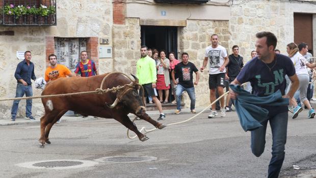 Toro Enmaromado de Astudillo