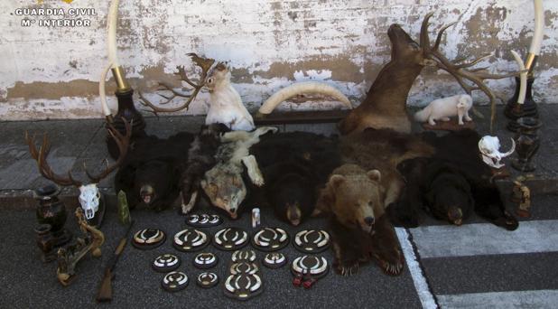 Parte de los trofeos de caza robados por la organización donostiarra