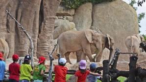 Bioparc Valencia prepara su escuela de vacaciones para que los niños disfruten el parque durante las navidades