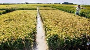 La Asociación Valenciana de Agricultores denuncia una estafa de cinco millones a más de 500 trabajadores