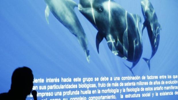 """Un conferenciante habla de la """"estructura social"""" de los cetáceos en aguas canarias"""