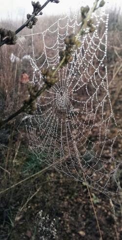 Gotas de H2O en tela de araña