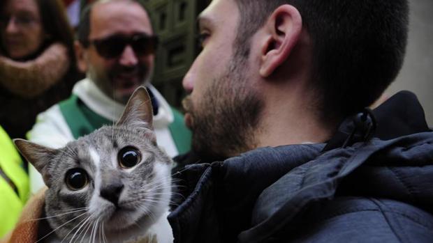 Bendición de mascotas en la Iglesia de San Antón de Madrid