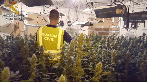 Plantación con dispositivos de climatización para el cultivo intensivo