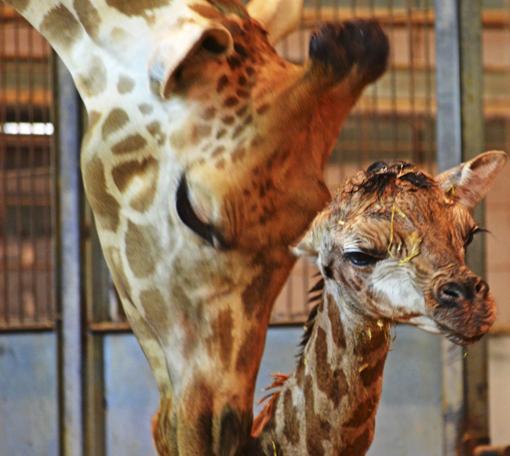 Imagen de la cría y la madre