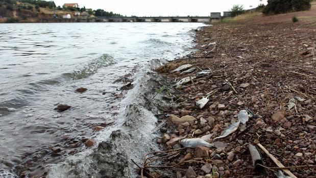 Peces muertos a orillas del pantano del Vicario, en Ciudad Real