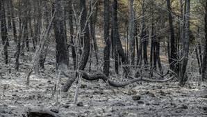 Aspecto que presenta la sierra de Los Collados, dentro del Parque Natural de Los Calares del Río Mundo y La Sima tras el fuego que se inició el pasado jueves en La Parrila, (Yeste)