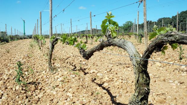 El turismo del vino atrae cada vez a más gente