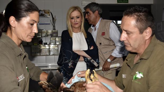 Dos veterinarios del CRAS atienden a un buitre negro, ante la mirada de la presidenta Cifuentes