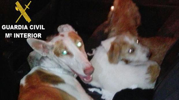 Imagen de los perros robados encontrados en el maletero del coche