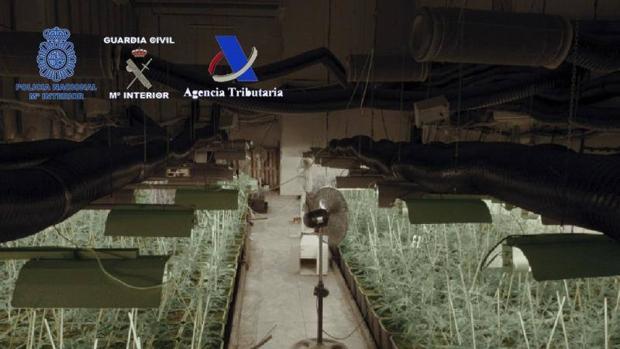 Imagen de archivo de la Agencia Tributaria de un cultivo de marihuana