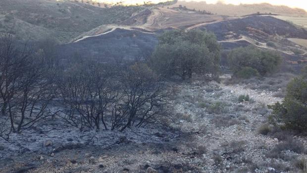 Superficie quemada en Cañamares (Cuenca)
