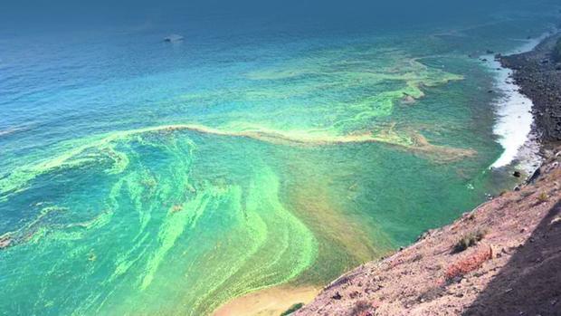 Ética y microalgas en Tenerife